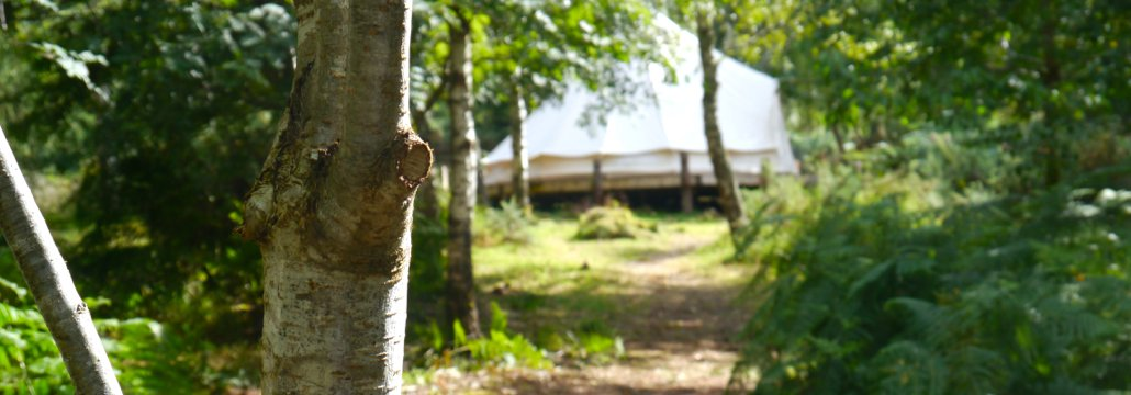 bell tent in the woods at Ace