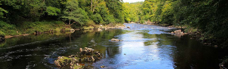 woodland walk from Ace Adventure along the River Findhorn